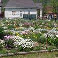 ハウステンボス 庭園