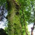 春日公園の木