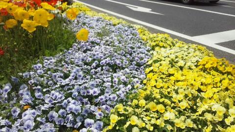 花いっぱい♪